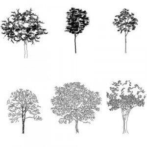 Bloc cad de Complex trees en dwg