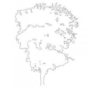 Bloc cad de élévation arbre en dwg
