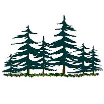 Bloc cad de Bois de pin et sapin en dwg