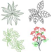 Bloc cad de Plantes d'intérieur, Roses en dwg