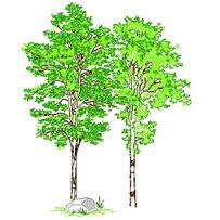 tree_elev