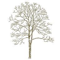 tree_elev11