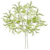 tree_elev4