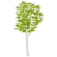 tree_elev5